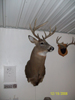 Hunting Trophy Picture